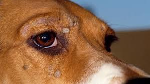 Hond met teken
