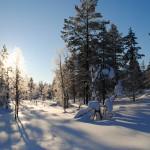 Lapland 2016 024