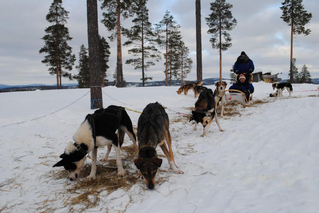 Lapland 2016 167