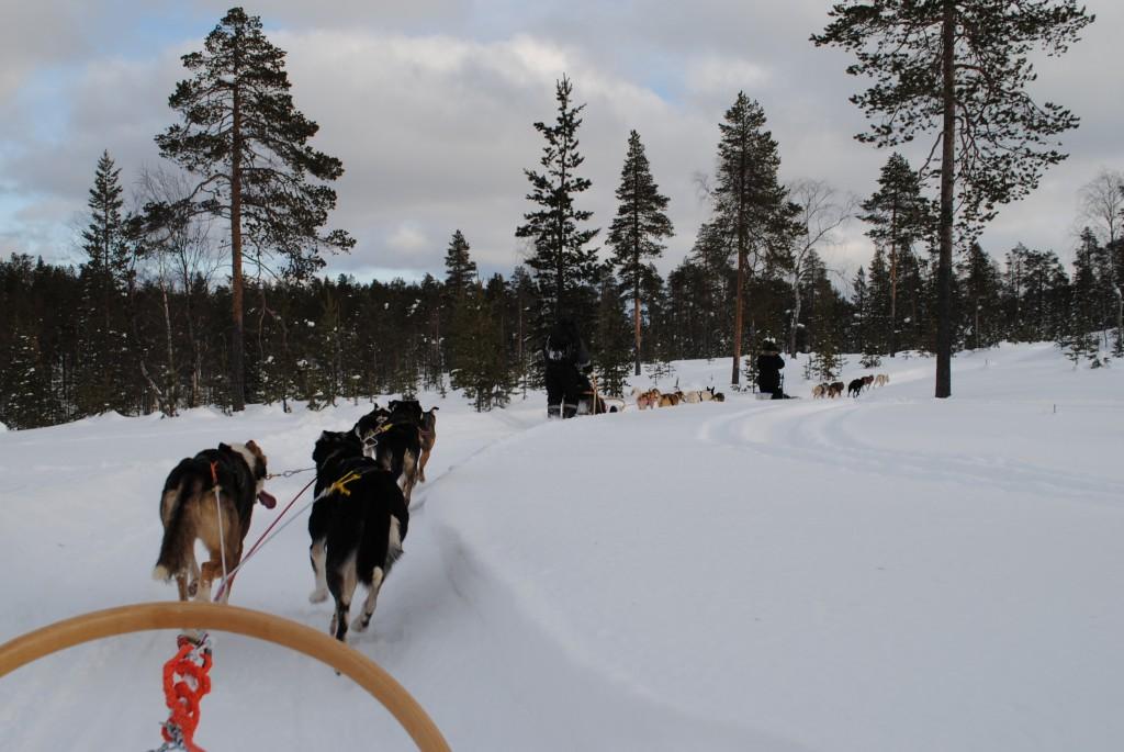 Lapland 2016 178A