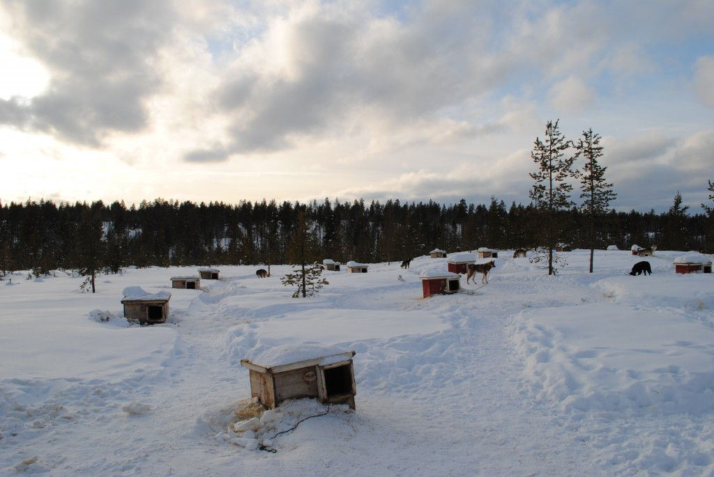Lapland 2016 218