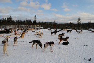 Lapland 2016 219